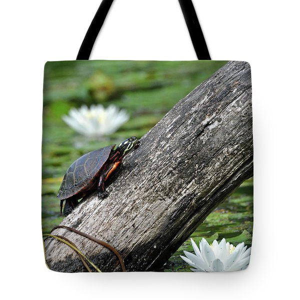 Turtle Sunbathing Tote Bag by Glenn Gordon