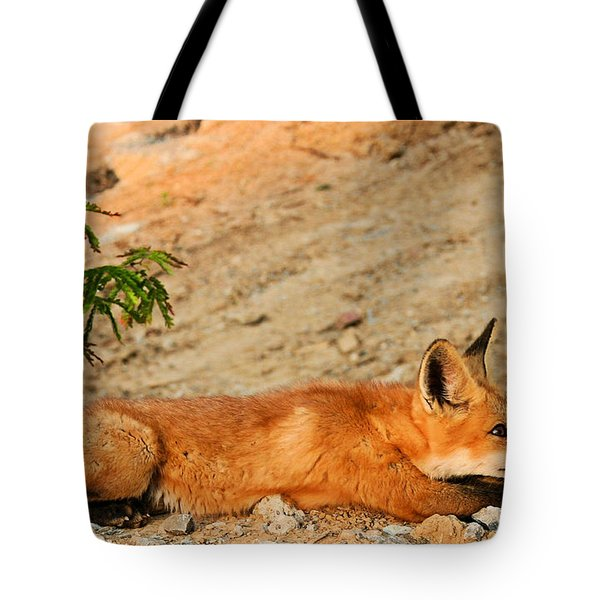 Tote Bag featuring the photograph Sunbathing by Kristin Elmquist