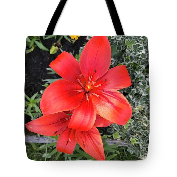 Sunbeam On Red Day Lily Tote Bag