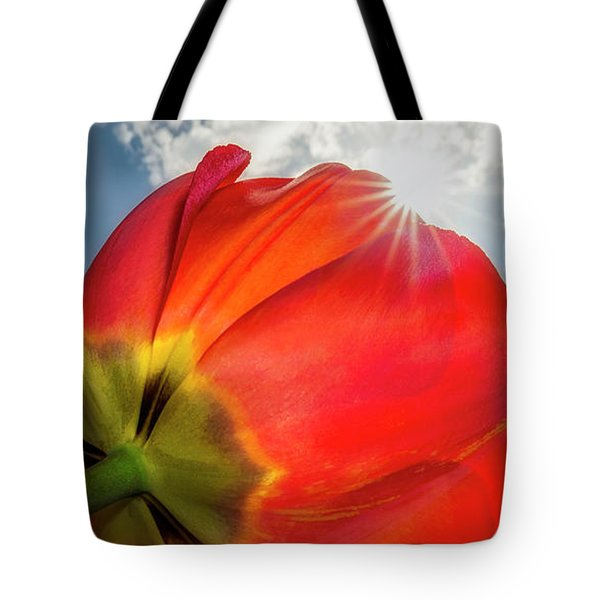 Tote Bag featuring the photograph Sunbeams And Tulips by Adam Romanowicz