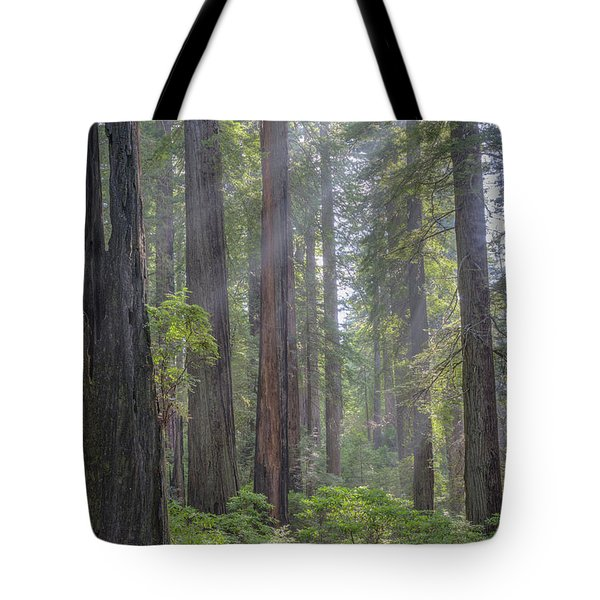 Tote Bag featuring the photograph Sunbeams Through The Forest by Paul Schultz