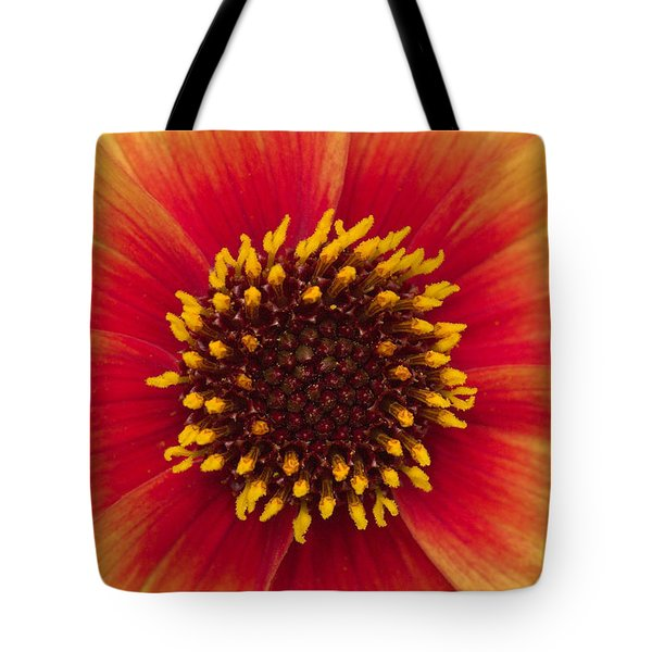 Sunburst Tote Bag by Hazy Apple