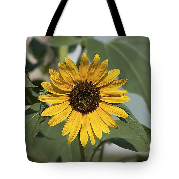 Sunflower 20120718_06a Tote Bag by Tina Hopkins