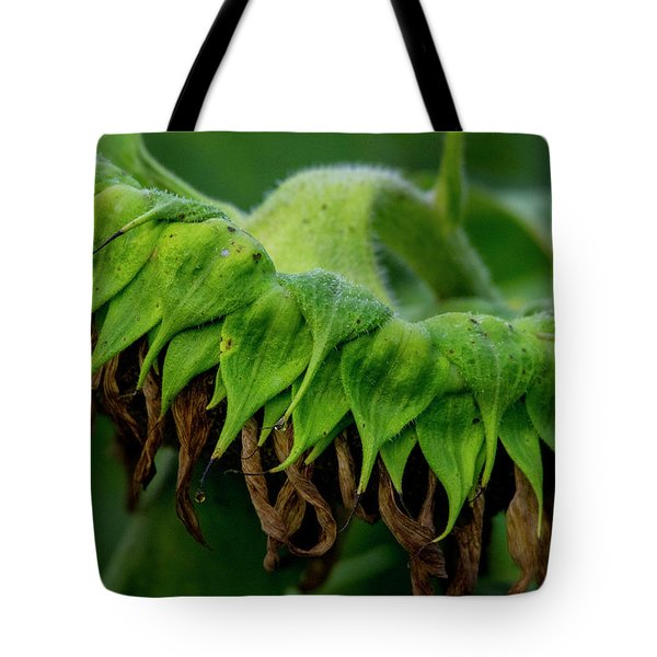 Tote Bag featuring the photograph Sunflower 2017 1 by Buddy Scott