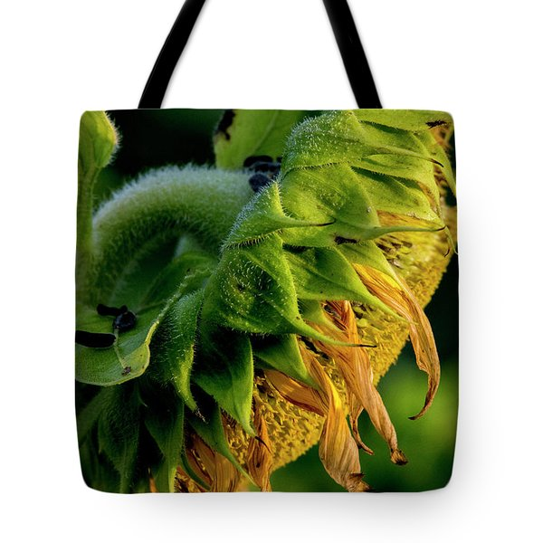 Tote Bag featuring the photograph Sunflower 2017 14 by Buddy Scott