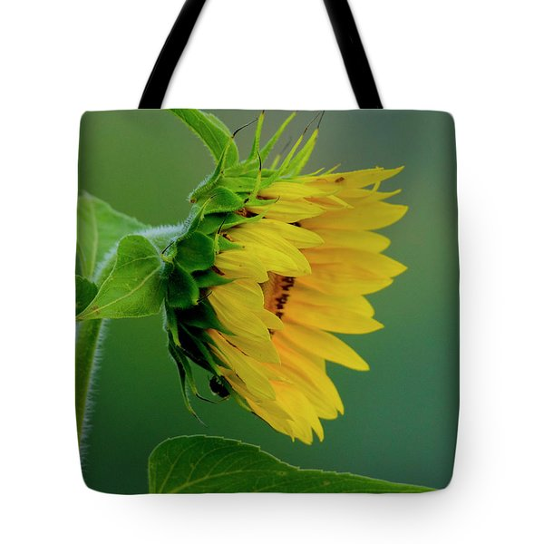 Tote Bag featuring the photograph Sunflower 2017 2 by Buddy Scott