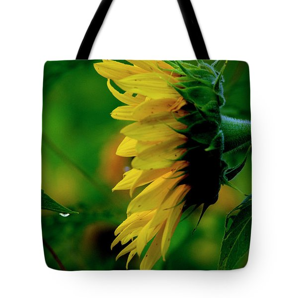 Tote Bag featuring the photograph Sunflower 2017 3 by Buddy Scott