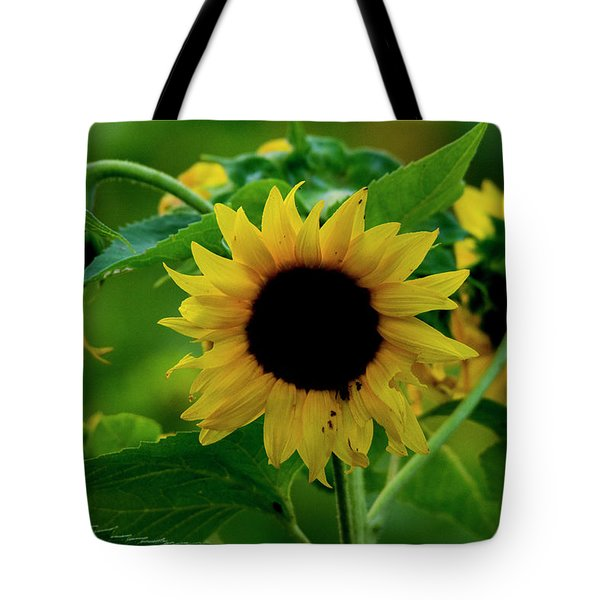 Tote Bag featuring the photograph Sunflower 2017 5 by Buddy Scott