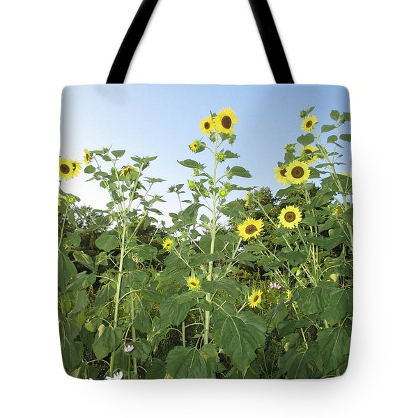 Sunflower Delight Tote Bag by Charlotte Gray