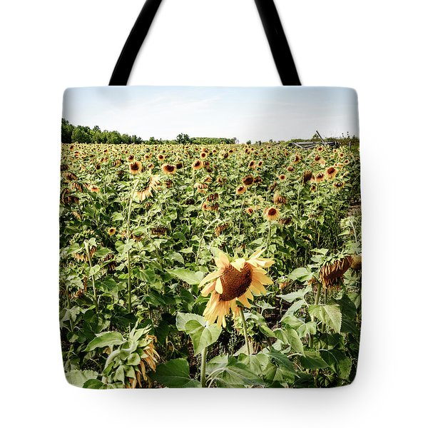 Tote Bag featuring the photograph Sunflower Field by Alexey Stiop