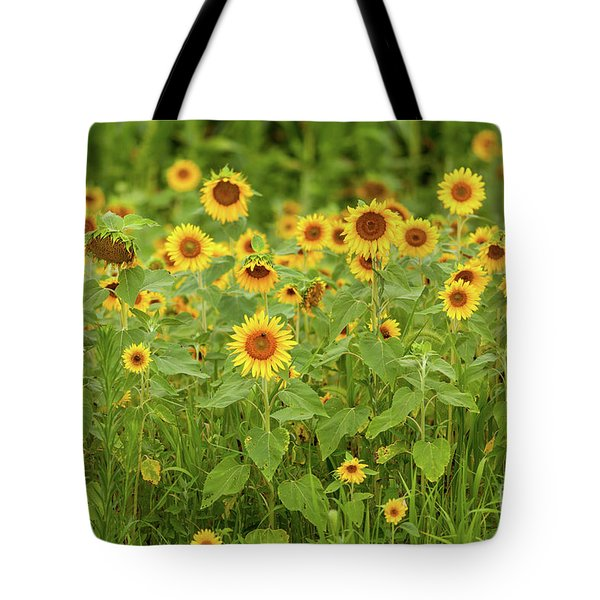 Sunflower Patch Tote Bag