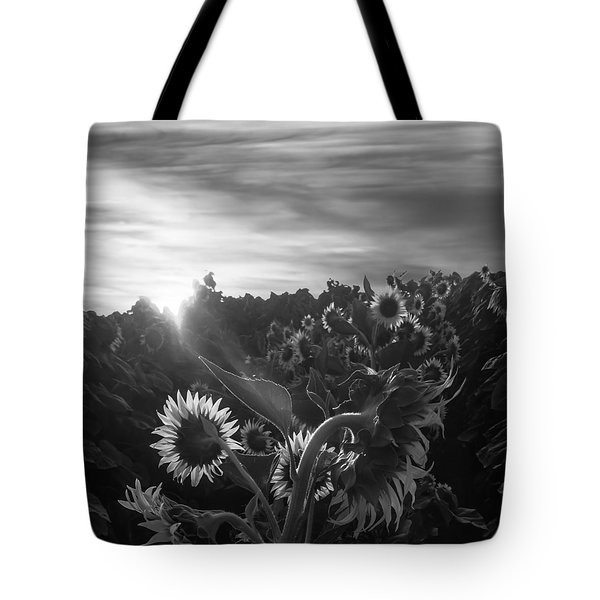 Sunflower Rise In Black And White Tote Bag