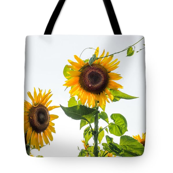 Sunflower With Vine Tote Bag