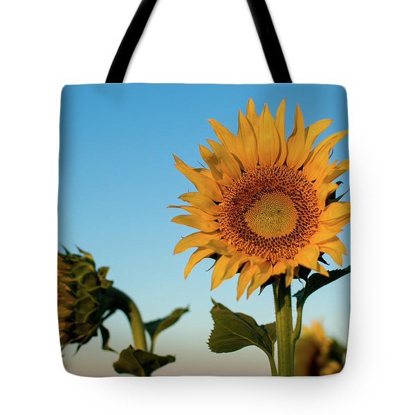Sunflowers At Sunrise 1 Tote Bag