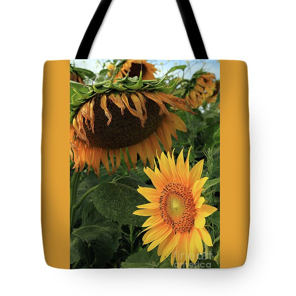 Sunflowers Past And Present Tote Bag
