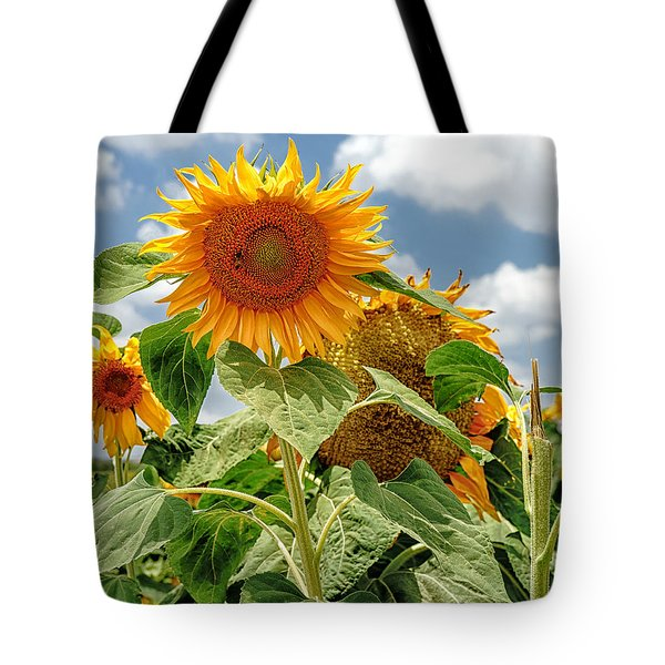 Sunflowers Tote Bag by Uri Baruch