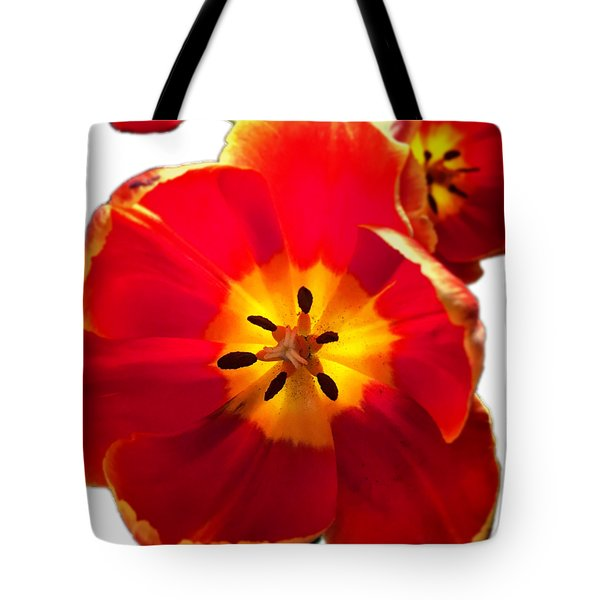 Sunkissed Tulips Tote Bag
