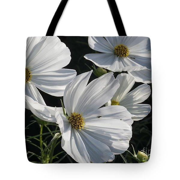 Sunlight And White Cosmos Tote Bag