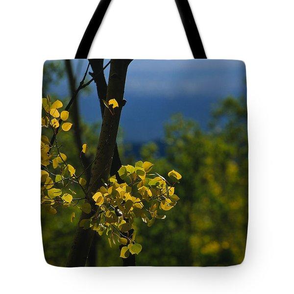 Sunlight Shines On Golden Aspen Tree Tote Bag