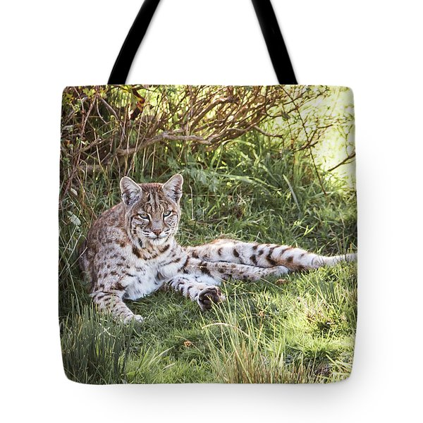 Sunlight Stop  Tote Bag