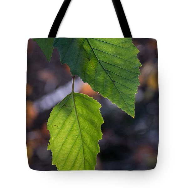 Sunlight Through Birch Leaf Branch Tote Bag