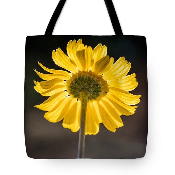Sunlit Four-nerve Daisy  Tote Bag
