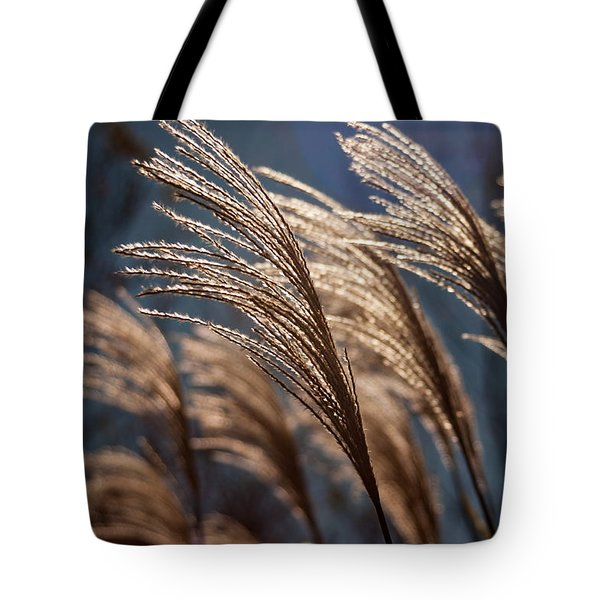 Sunlit Grass Tote Bag by Jay Stockhaus
