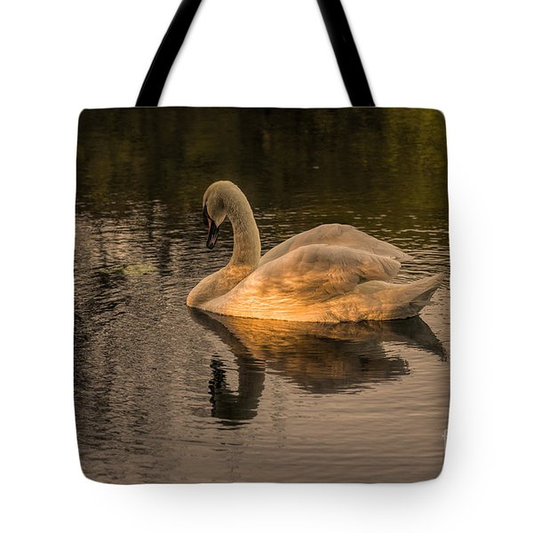 Sunlit Mute Swan  Tote Bag by David  Hollingworth