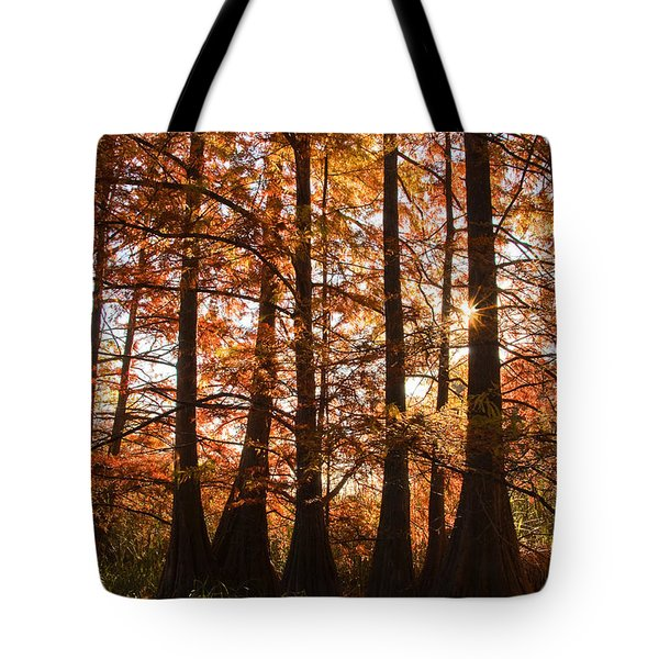 Tote Bag featuring the photograph Sunlit Trees At Lake Murray by Tamyra Ayles