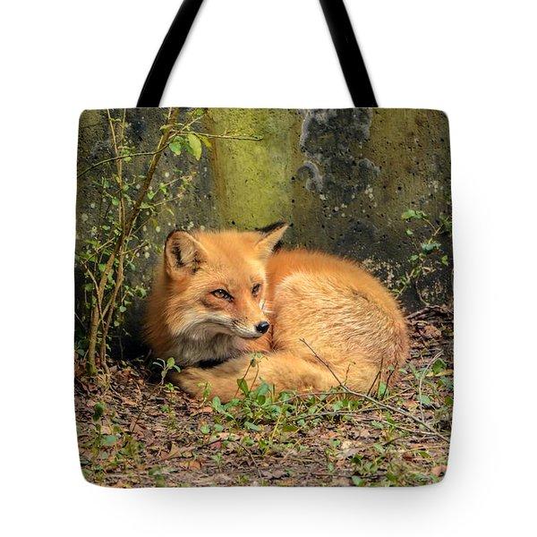 Sunning Fox Tote Bag