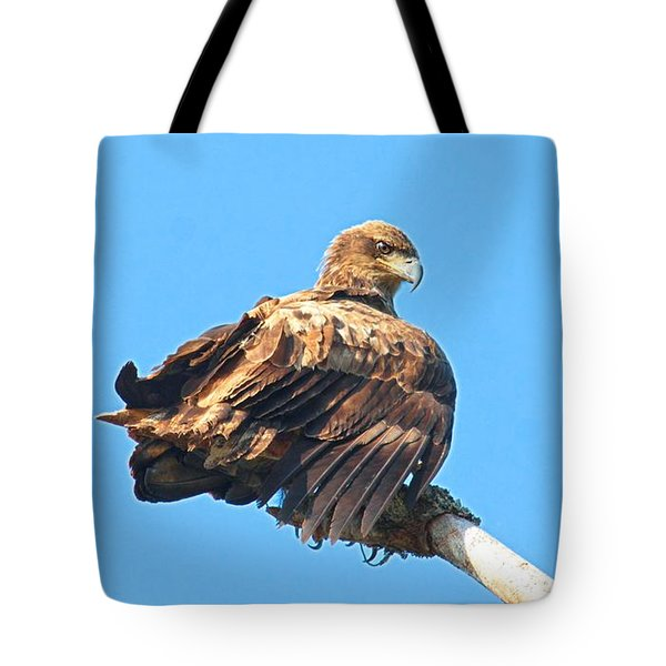Tote Bag featuring the photograph Sunning Out On A Limb by Debbie Stahre