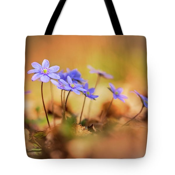 Tote Bag featuring the photograph Sunny Afternoon With Liverworts by Jaroslaw Blaminsky