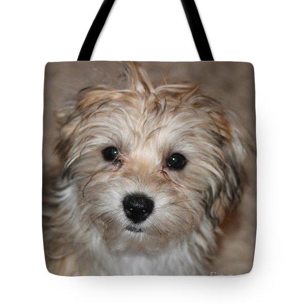 Sunny Boy Tote Bag