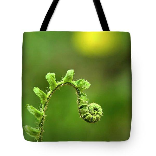 Sunrise Spiral Fern Tote Bag by Christina Rollo