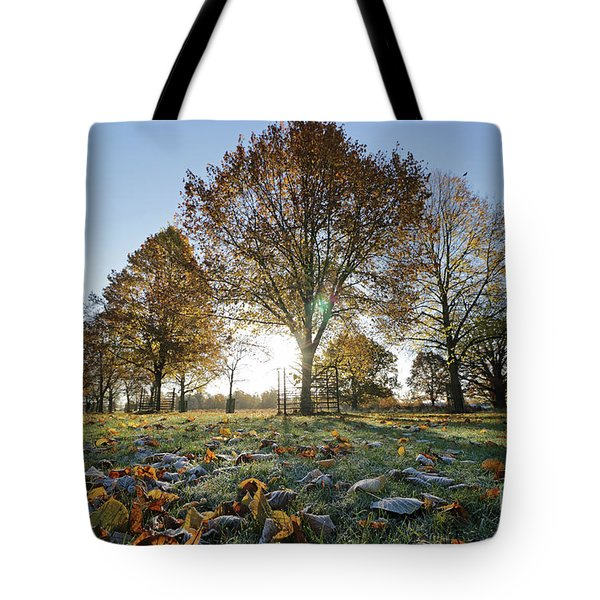 Sunrise Through Lime Trees Tote Bag