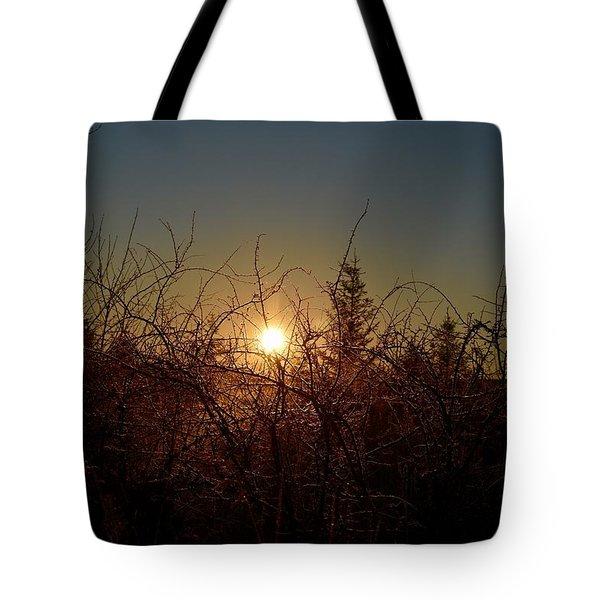 Sunrise Thru The Brush Tote Bag