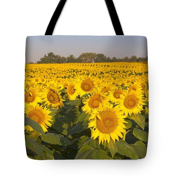 Sunshine Flower Field Tote Bag