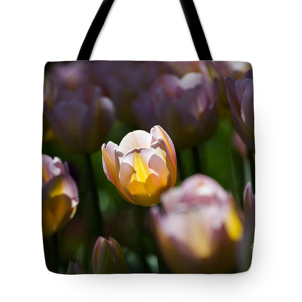 Tote Bag featuring the photograph Sunshine Tulips by Angela DeFrias