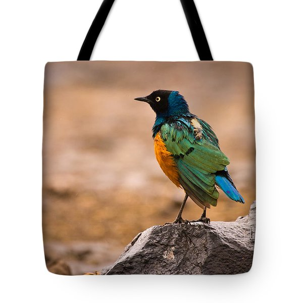 Superb Starling Tote Bag