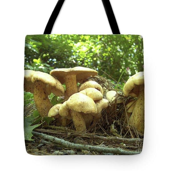 Surprise Fungi In Gibbs Garden Tote Bag
