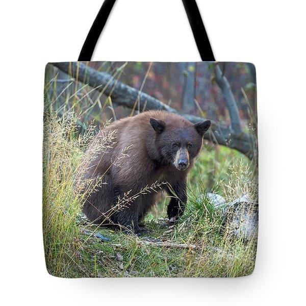 Surprised Bear Tote Bag