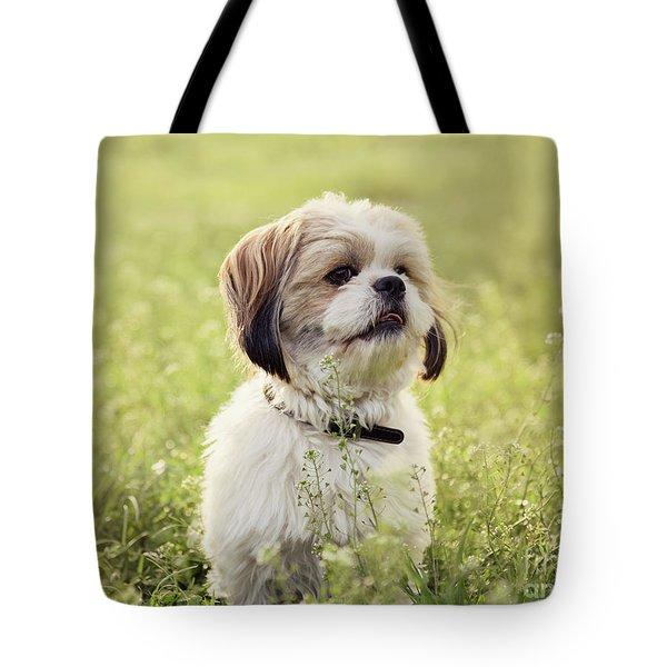 Sute Small Dog Tote Bag