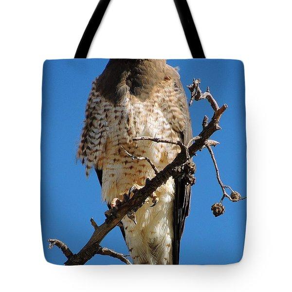 Swainson's Hawk Tote Bag