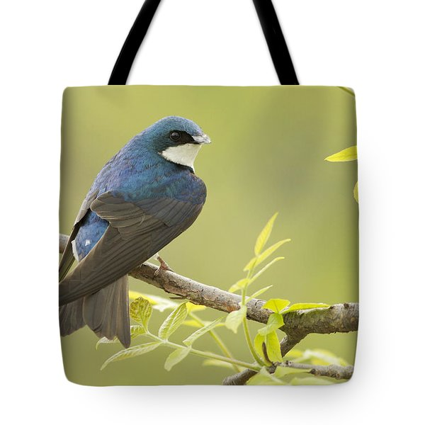 Swallow Tote Bag by Mircea Costina Photography