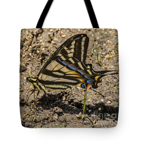Tote Bag featuring the photograph Swallowtail Butterflies by Mitch Shindelbower