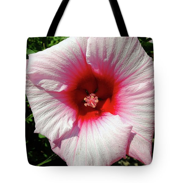 Swamp Mallow Hibiscus Tote Bag by Scott Kingery