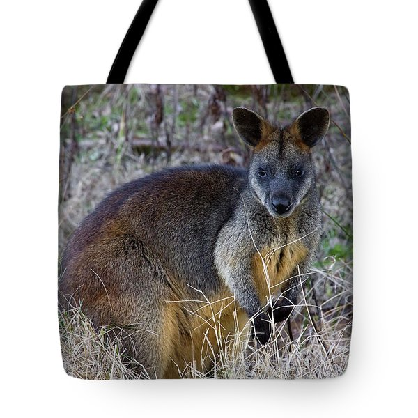 Tote Bag featuring the photograph Swamp Wallaby  by Miroslava Jurcik
