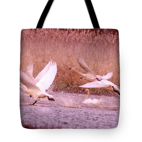 Swans In Take Off  Tote Bag