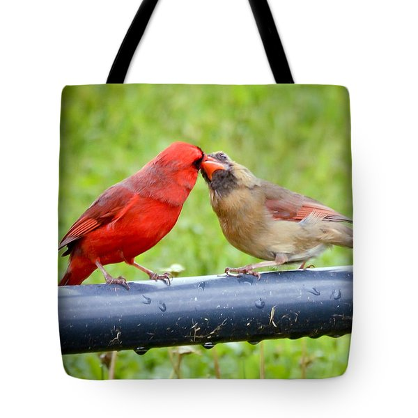 Sweet Cardinal Couple Tote Bag