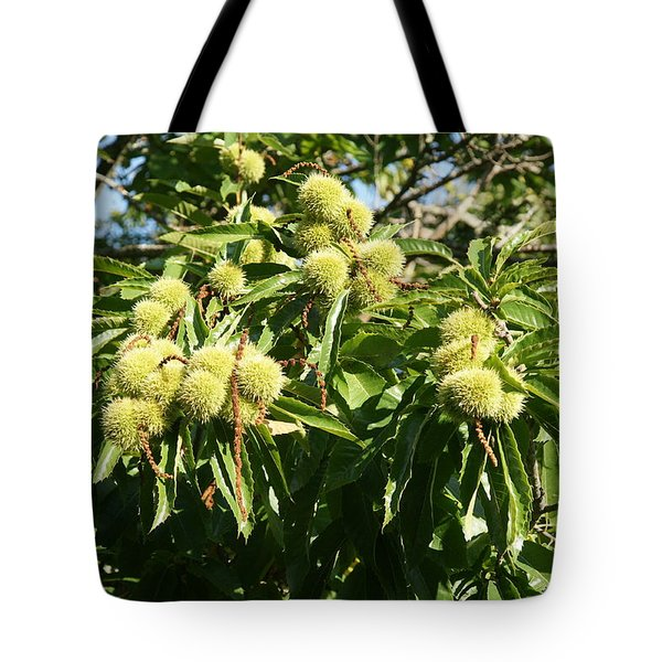 Tote Bag featuring the photograph Sweet Chestnut by Christian Zesewitz